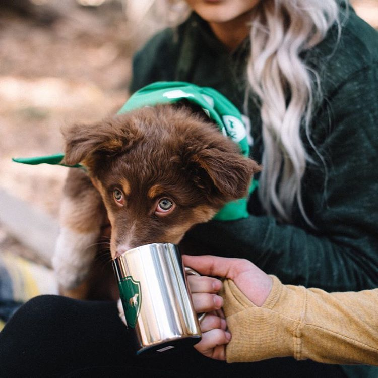 Inspiring the world to go Camping With Dogs® and Hiking With Dogs® #campingwithdogs #hikingwithdogs