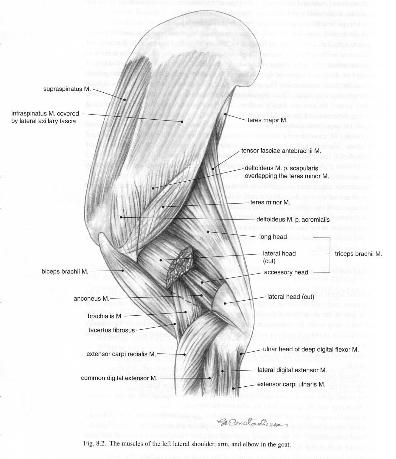 Goat Leg Bones Diagram - Wiring Diagram & Electricity Basics 101 •
