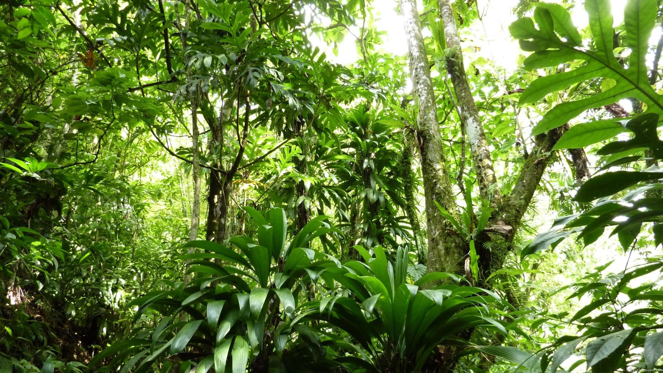 Jungle Wallpaper 1680x1050 Tropical Wallpapers 49