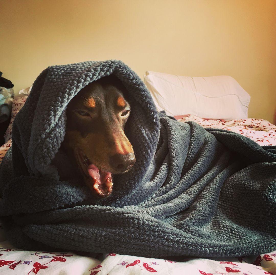 Animal Jobs Near Me 2020 Weiner dog, Doxie, Sausage dog