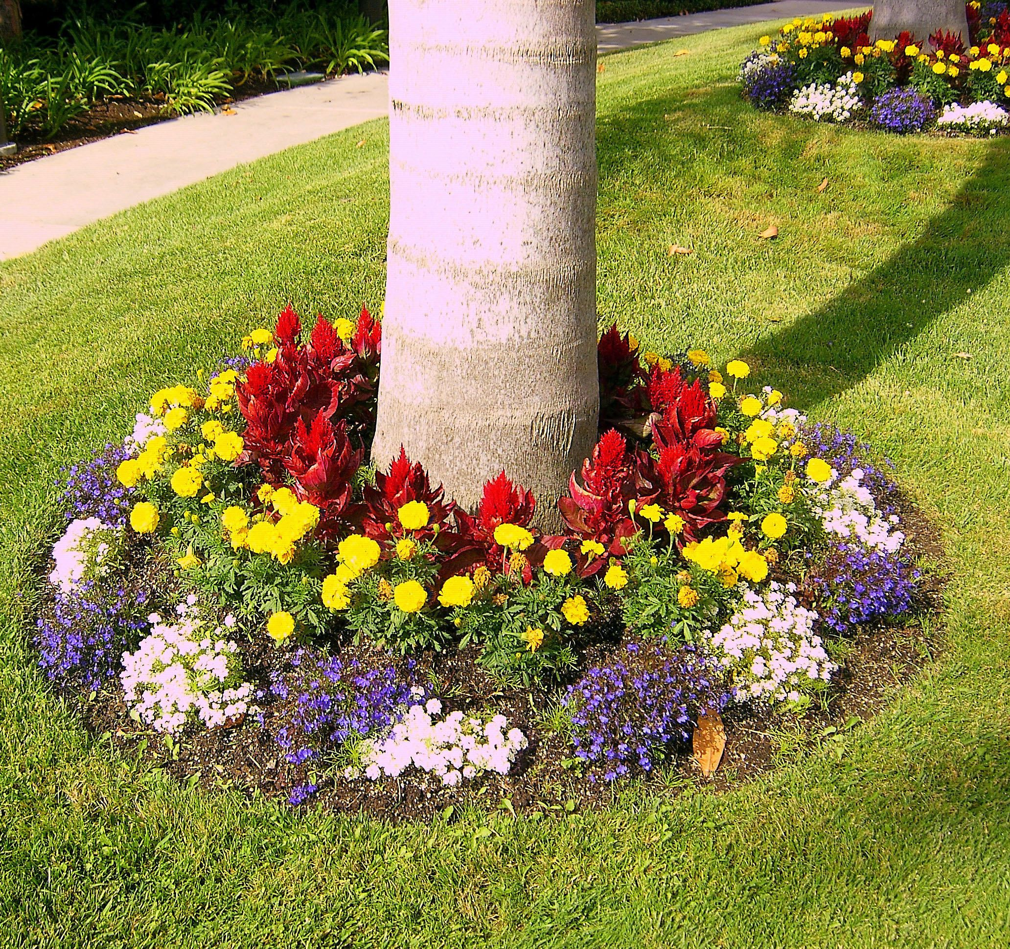 Colorful landscaping colorful tree base landscaping for Tree decorations for garden