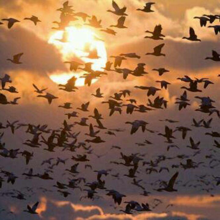 صور جمال الطبيعة Pesquisa Google Nature Outdoor Celestial