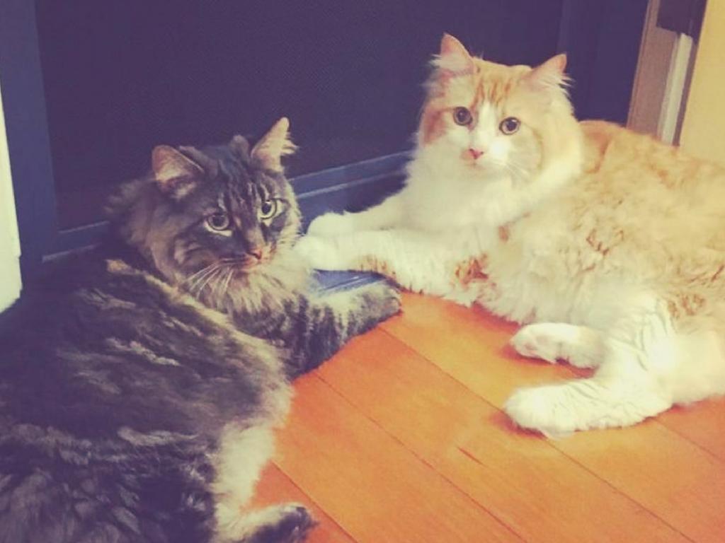 Cat Transport To Australia Otis And Dash Cats Otis Pets