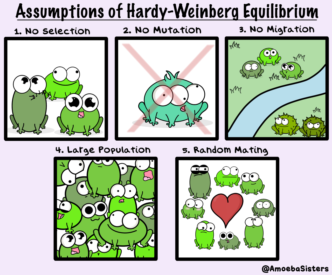 Hardy Weinberg Equilibrium Assumptions The Paramecium Parlor