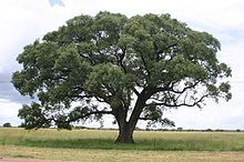 Pin by Janet Jacobs on TREES | Marula tree, African plants