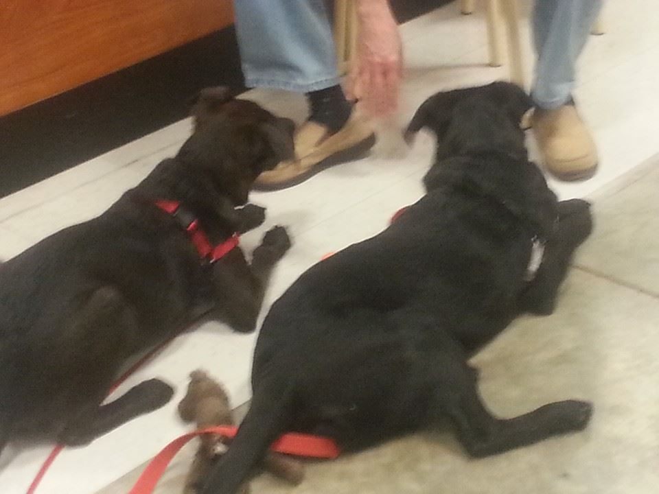 Midnight And Jet Graduated Puppy Class They Were Adopted From