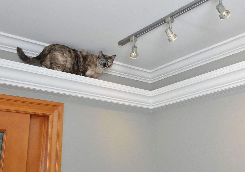 Picture Rail Crown Moulding Cat Track We Put Molding With A Carpeted Top Around The Main Rooms About 12 From Ceiling