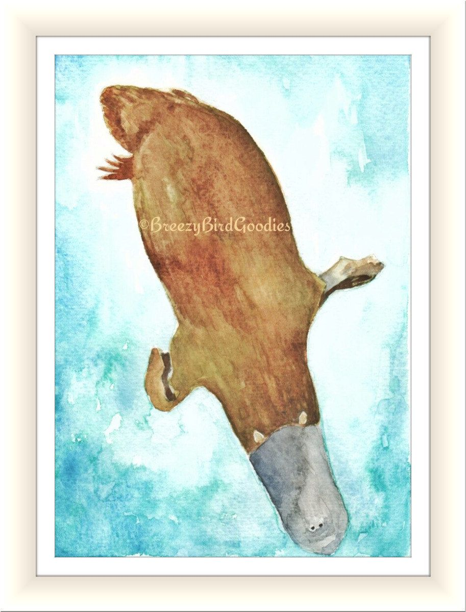 platypus print watercolor platypus australian platypus art for home australian animal illustration