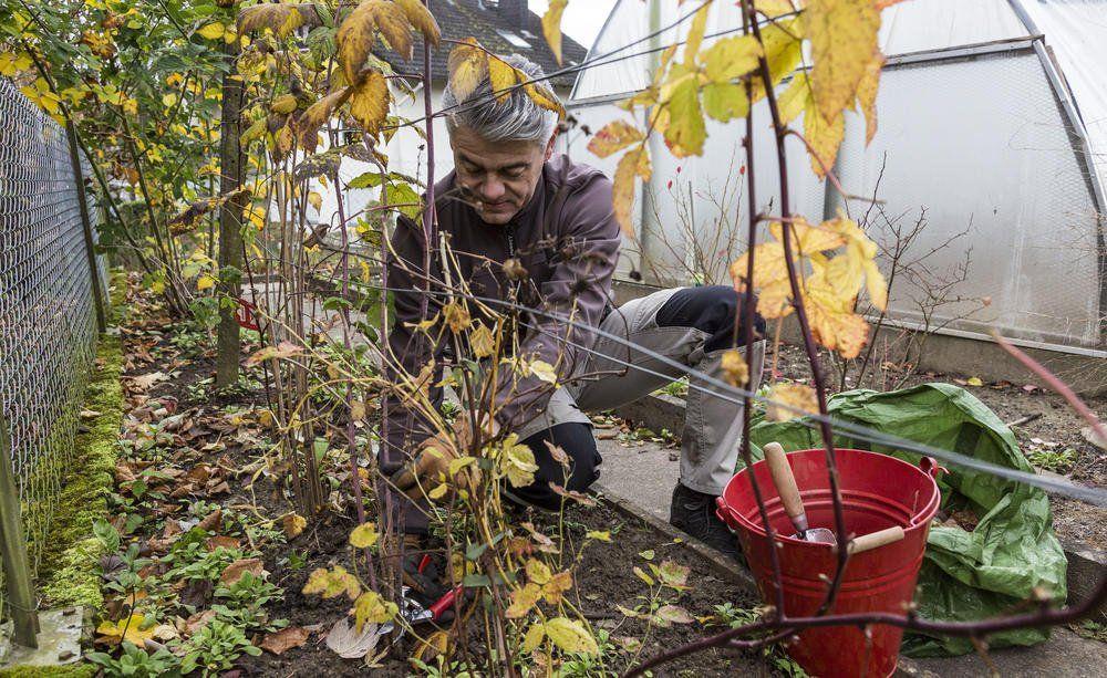Himbeerenpflege Die Drei Haufigsten Fehler Mein Schoner Garten Garten Himbeeren Pflege Pflanzen
