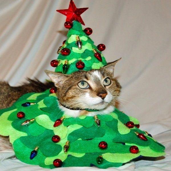 Top 10 Festive Costume Christmas Tree Cats O Catmas Tree! O Catmas Tree! # & Top 10 Festive Costume Christmas Tree Cats O Catmas Tree! O Catmas ...
