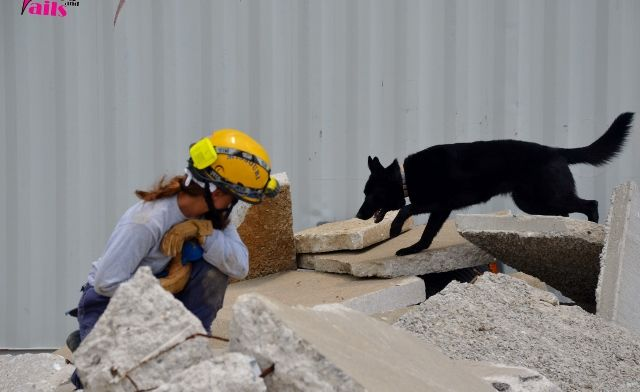 Search And Rescue Saturday A Video Of Area Search Search And
