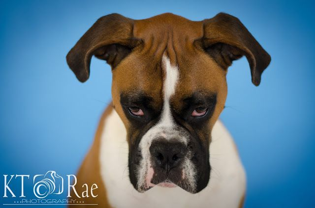 Dog Photo Session  Furry Friend Session by KT Rae Photography