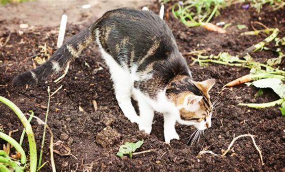 Comment cr er un r pulsif naturel et non dangereux pour - Empecher les chats de venir dans le jardin ...