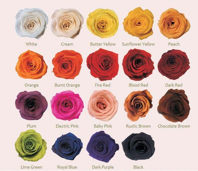 Natural Colors Of Roses Google Search Rose Flowers Color