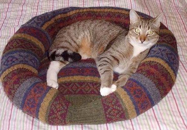 panier chat avec pull