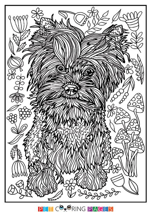 Free printable Yorkshire Terrier coloring page available for