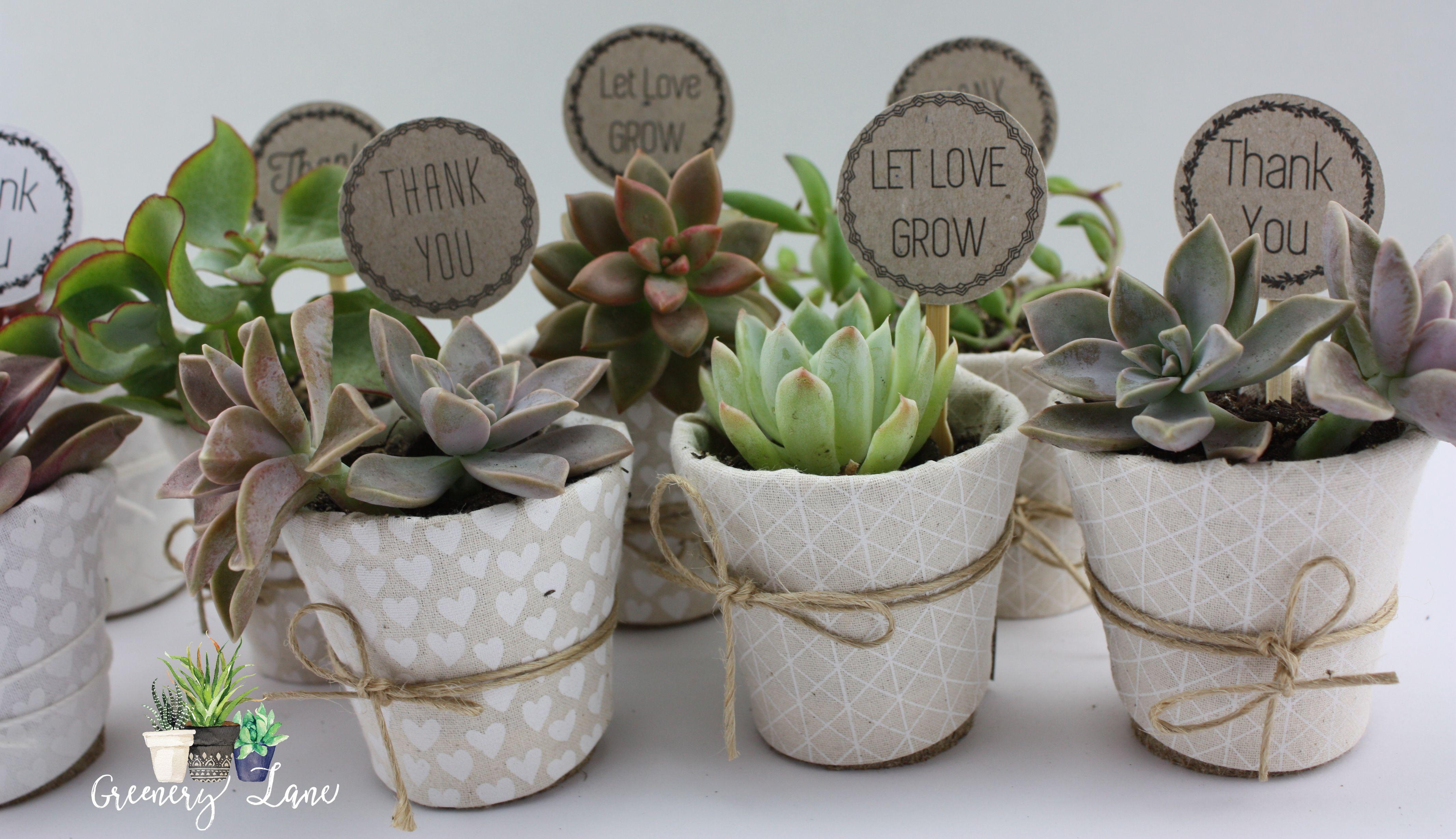 eco pot succulent wedding favours 100 biodegradable eco