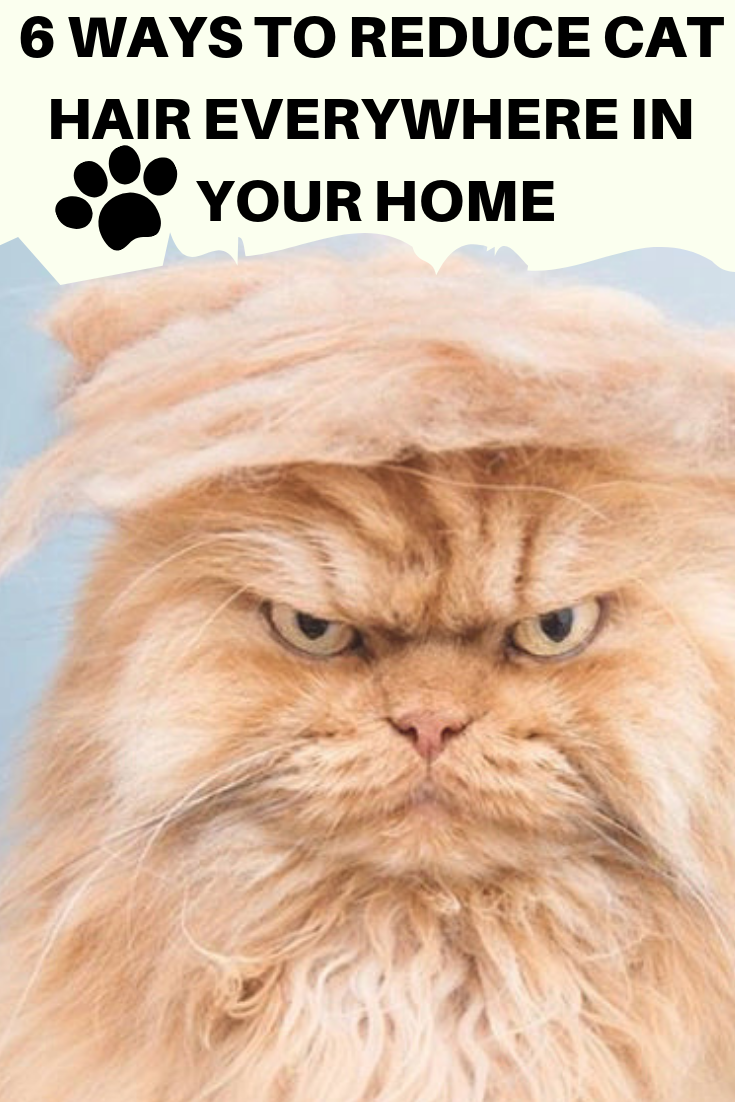6 Ways To Reduce Cat Hair Everywhere In Your Home (With