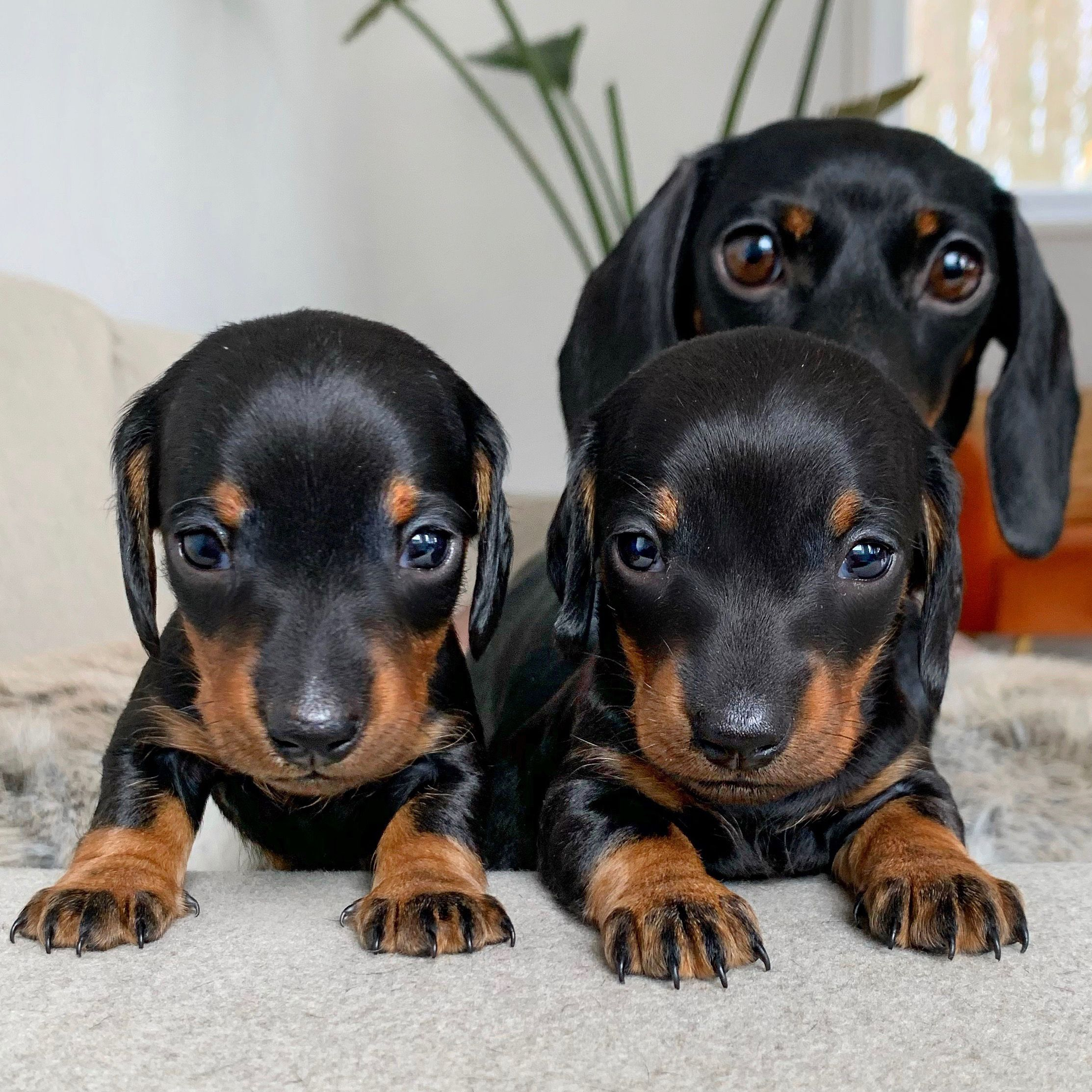 Pin By Becky Gravitt On So So Cute In 2020 Puppies Baby