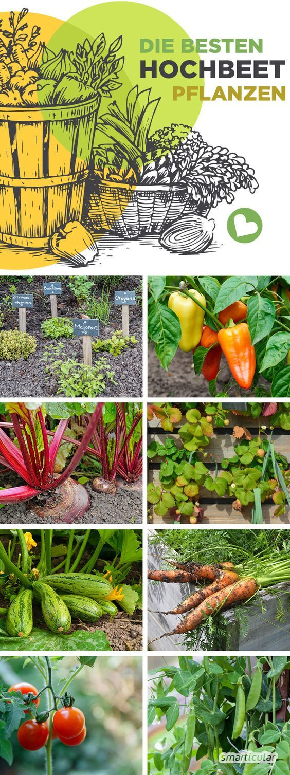 Die besten Hochbeetpflanzen: Gemüse, Kräuter, Früchte für eine gute Ernte #gemüsepflanzen