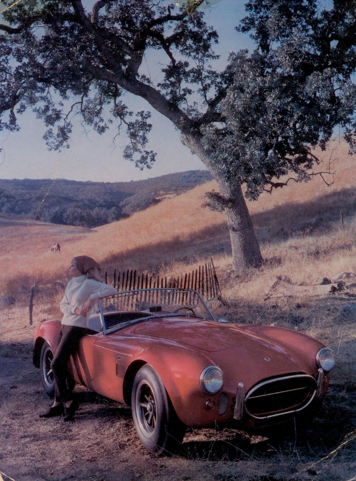 Shelby Cobra 427 Postcard - not a poster