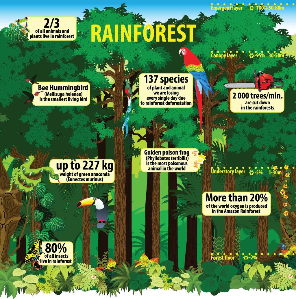 Rainforest Infographic Rainforest Deforestation Rainforest