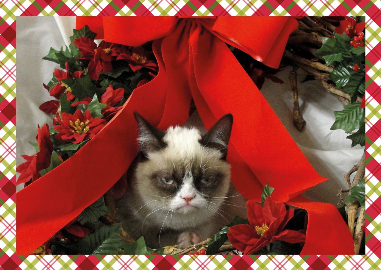 Tard Christmas Cards! I can\'t get enough of this cat! | LOL ...