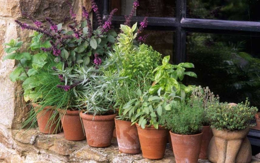 Thorny Problems How Can I Grow Herbs Outside The Kitchen