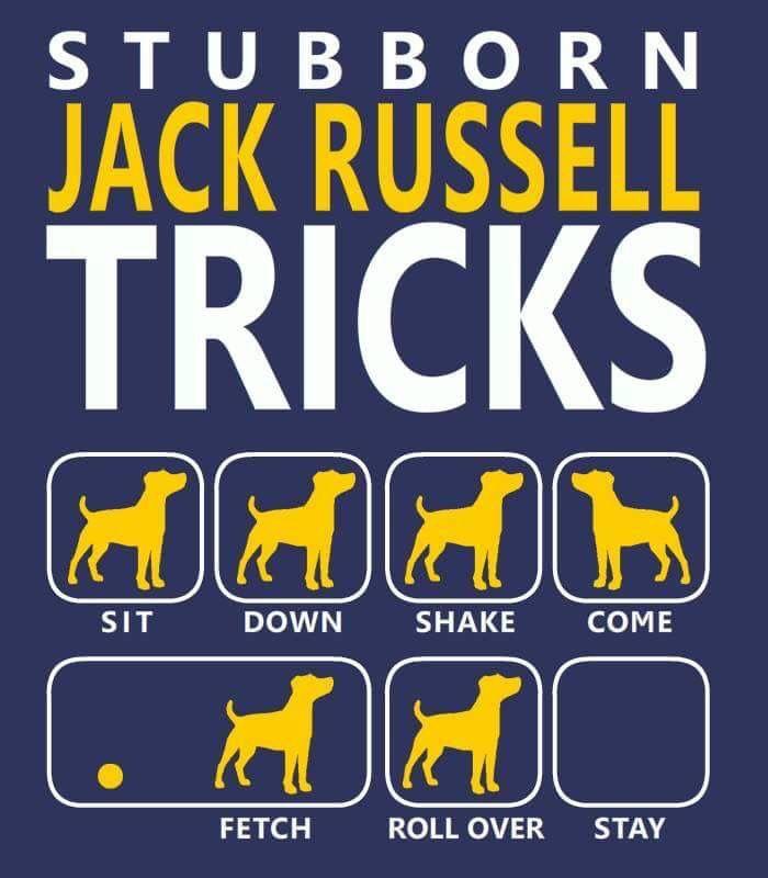Stubborn Jacks Hondjes Jack Russells Terrier