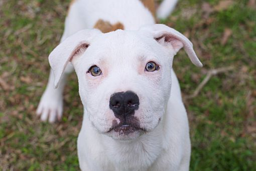 Pin On Calling All Angels Saving Rescuing Fostering