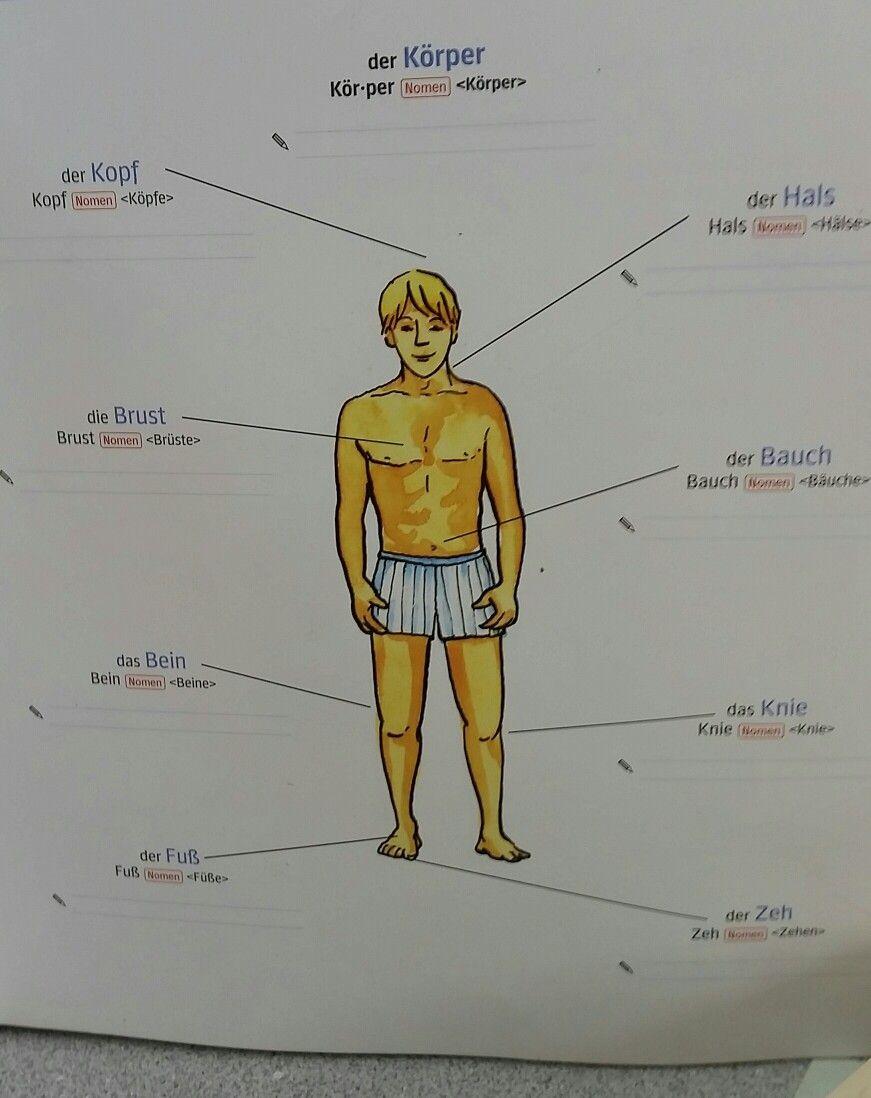 Der Körper