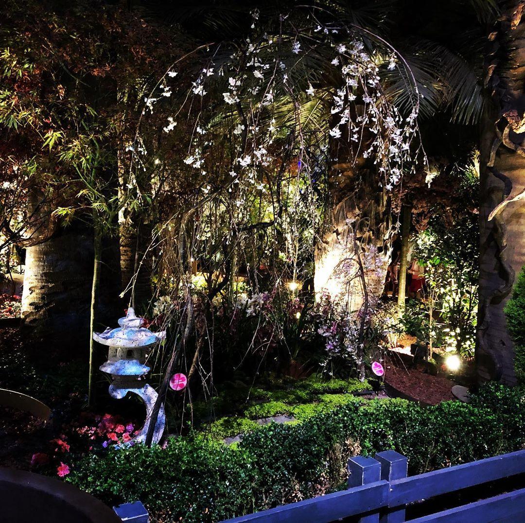 Magic Night Garden.  . #garden #gardening #blossom #singapore #nightgarden #placestovisit #placestovisitsingapore #gardenbythebay #beauty #gardeninspiration #orientalgarden #elegantgarden #gardendesign #gardeninspiration #gardenlights #gardenlife