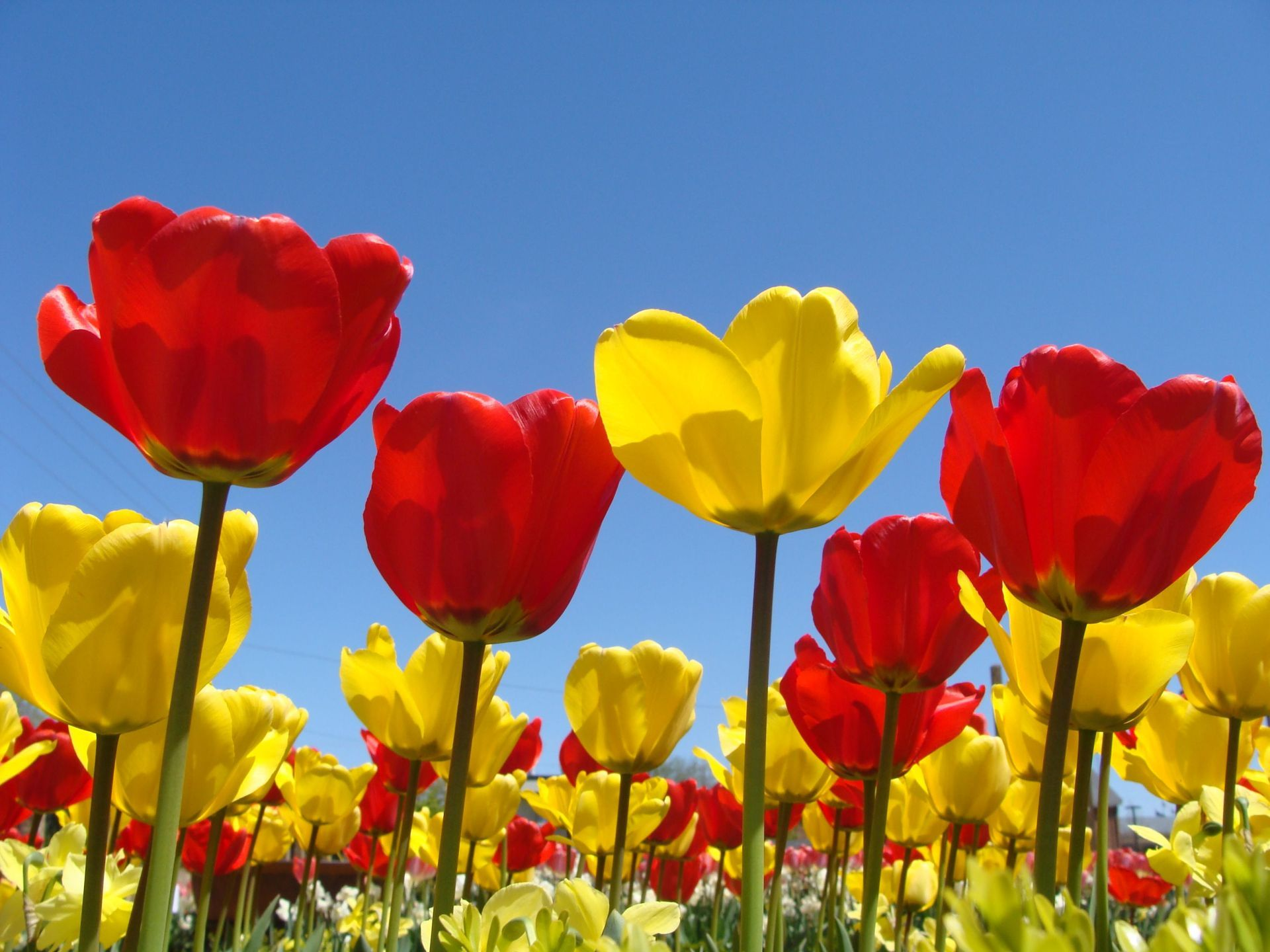 Spring Flowers Background Spring Flowers Wallpapers In Red Yellow