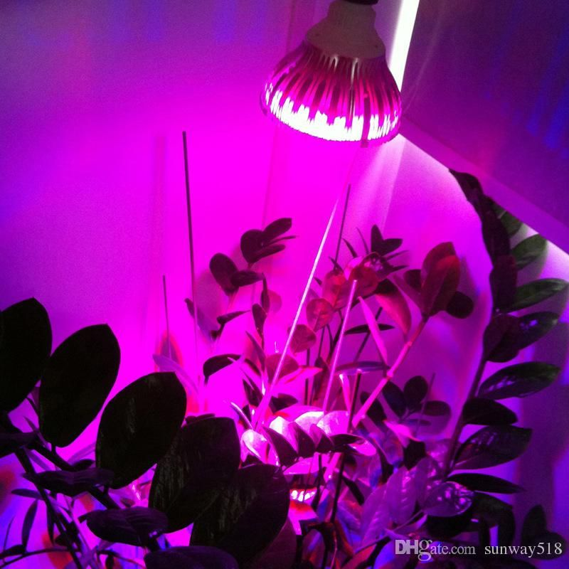 Best Led Grow Lights For Indoor Plants Commercial Led 400 x 300