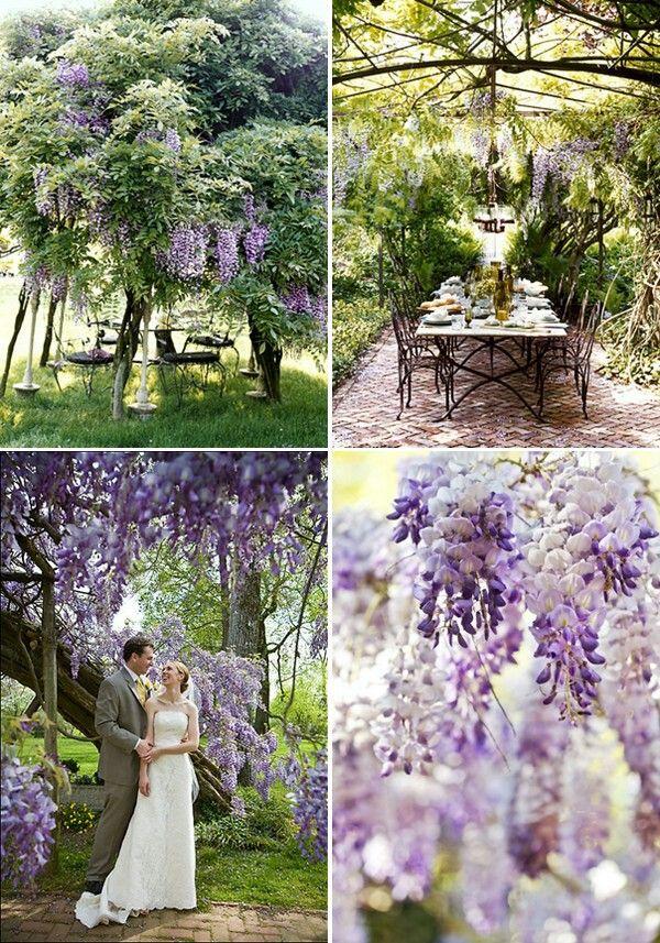 wisteria wedding wedding decor pinterest best wisteria wedding wisteria and wedding ideas. Black Bedroom Furniture Sets. Home Design Ideas