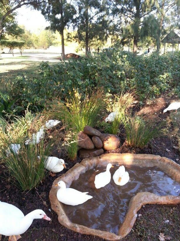 Duck Pond Home Made Duck Enclosure Duck Coop Backyard