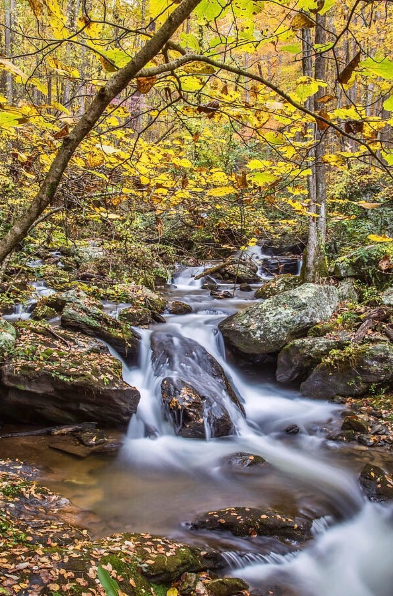 Anna Ruby Falls Downstream is a photograph by Michelle Wittmer ...