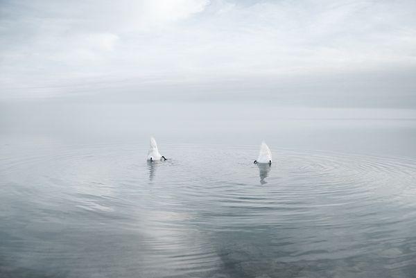 Fotos de paisagens de água do fotógrafo Hungaro  Akos Major.