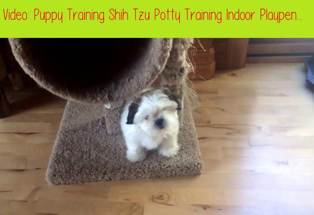 Puppy Training Shih Tzu Potty Training Indoor Playpenlucy Is 11