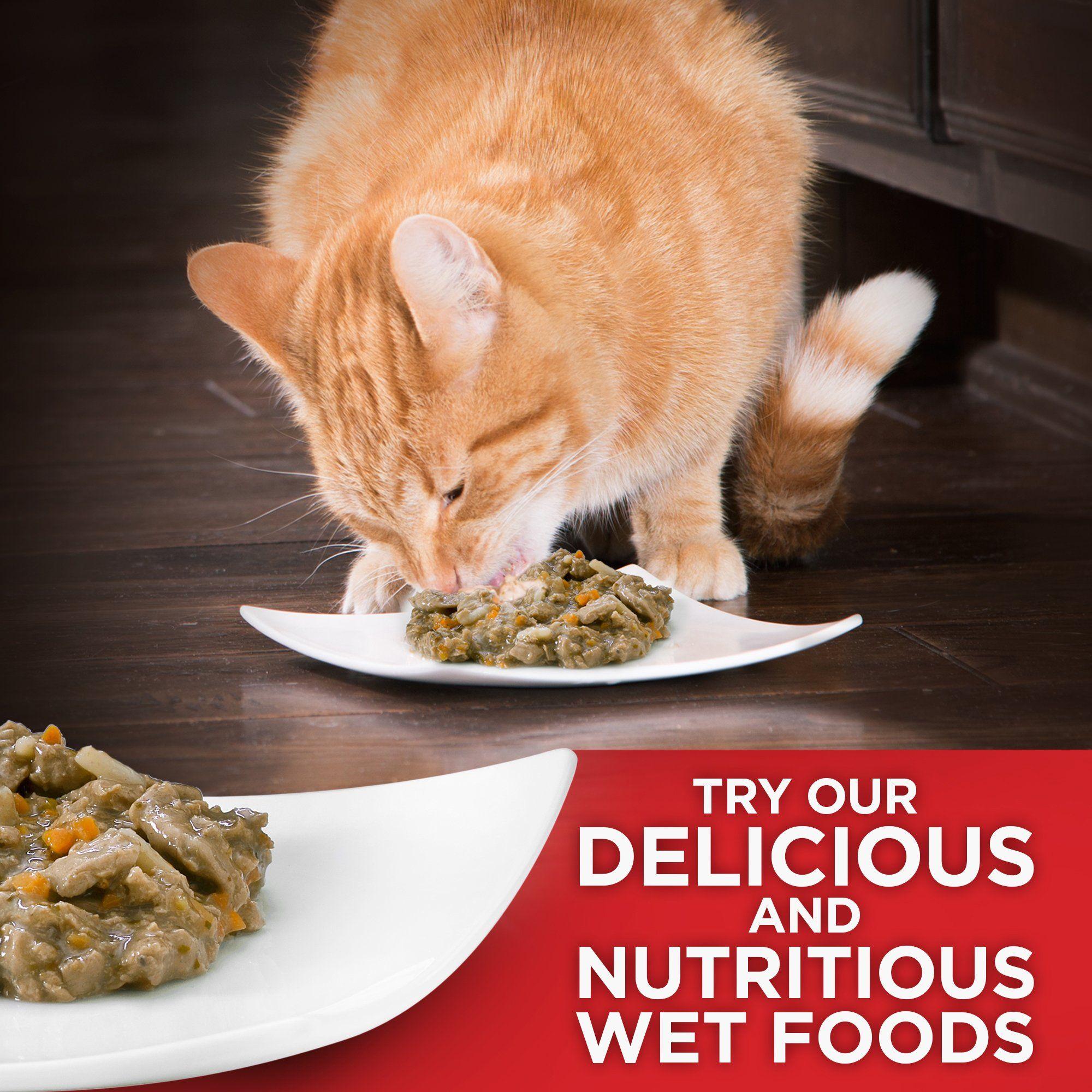 Hills Science Diet Kitten Food Healthy Development Chicken Recipe Dry Cat Food 7 Lb Bag Click Image For Mor Indoor Cat Food Dry Cat Food Hills Science Diet