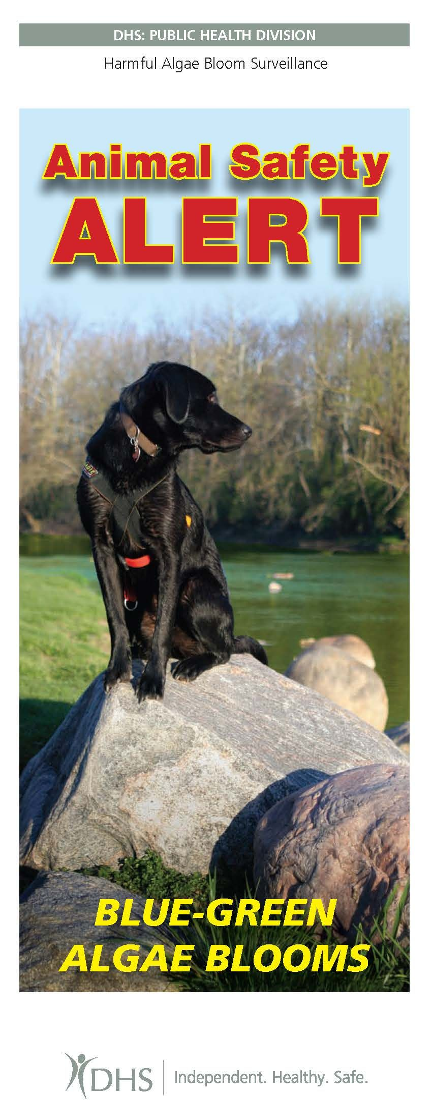 Animal safety alert bluegreen algae blooms, by the