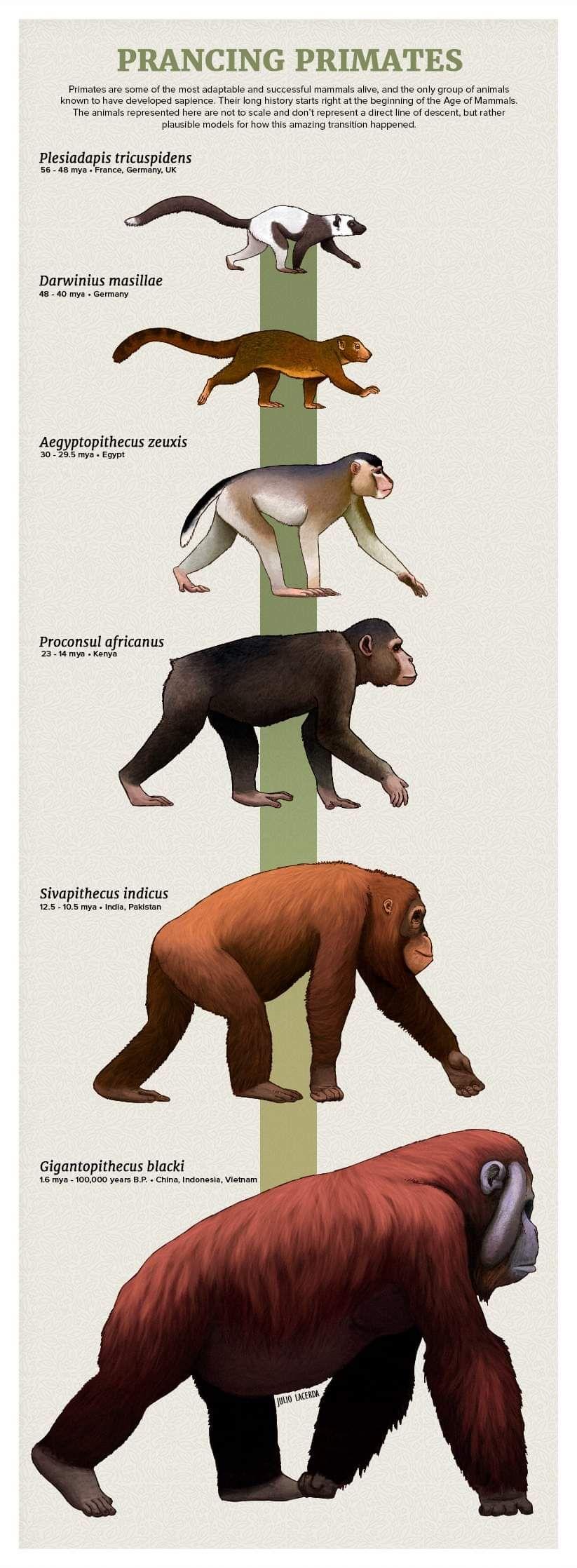 #prehistoricanimals
