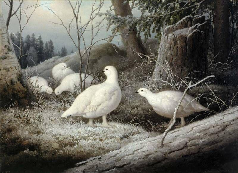 """""""Ptarmigans"""" - """"Riekkoja"""", 1893 – oil on canvas – Ferdinand von Wright (1822-1906)  -  Ateneum -Valtaosan elämästään Ferdinand v.Wright asui omissa oloissaan maaseudulla,etäällä taide-elämän keskuksista.Siitä huolimatta hänen työnsä vaikutti moneen suunt.maamme taidehistoriassa.Suhde taiteilijaveljiin,Magnukseen ja Wilhelmiin,pysyi läheisenä välimatkoista huolimatta.Veljekset vierailivat toistensa luona,maalasivat yhdessä, ja kertoivat kirjeissään toisilleen elämästään ja…"""