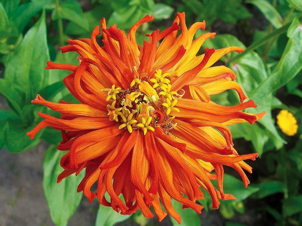 Ogród przed domem – jesienne kwiaty #jesień #kwiaty #ogród #pomysły #inspiracje #jesienne #kwiat #dom  #garden #ideas #flowers #autumn #green #colors