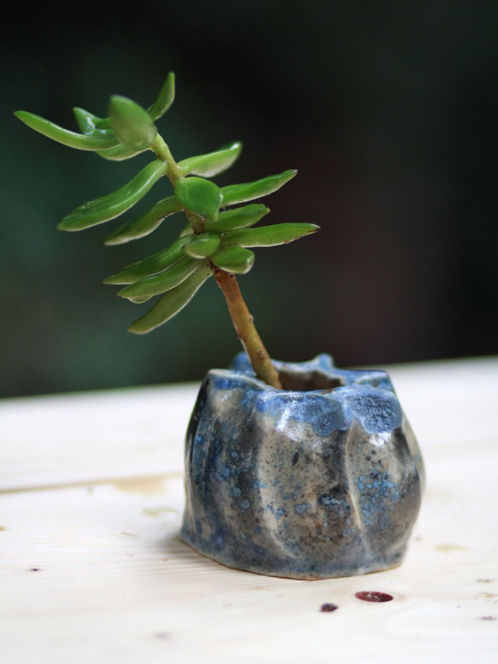 Handmade Planter Mini Sculpture Pot Cactus Bonsai Succulent Home Decor Pottery Unique Gift By Claymycraftstudioa