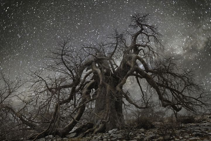 Beth Moon Returns to Photograph the World's Oldest Trees at Night - My Modern Met
