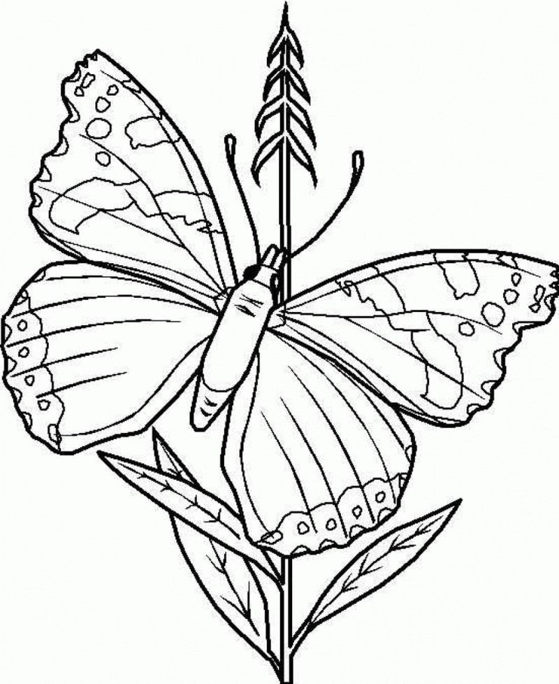 Cool Butterfly Coloring Pages Ideas For Girls And Boys Free Coloring Sheets Butterfly Coloring Page Animal Coloring Pages Coloring Pages For Kids