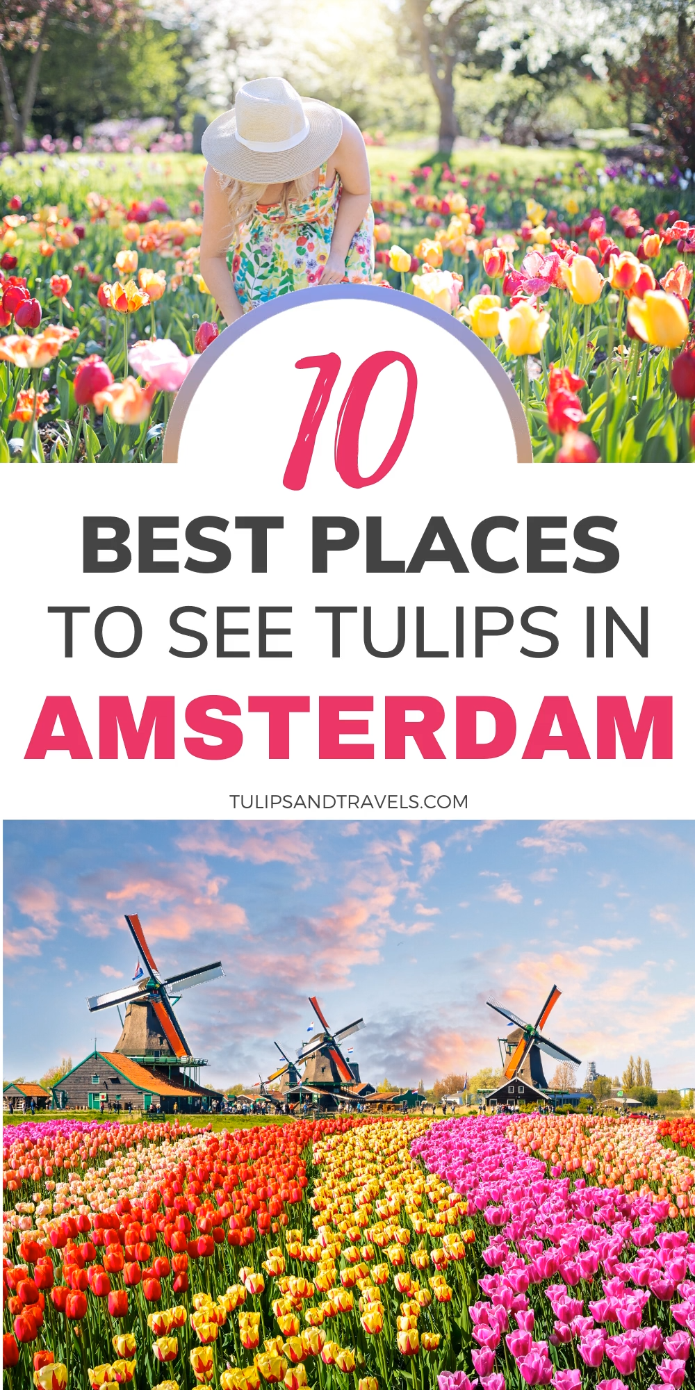 Every Spring from mid-March to mid-May, the Netherlands transforms into a colorful paradise full of gorgeous blooming tulips. Make sure you don't miss out on Tulip Season 2020 and come visit Amsterdam and Keukenhof this Spring! #amsterdam #netherlands #tulips #holland #tulipseason #traveltips #travelguide #keukenhof #lisse