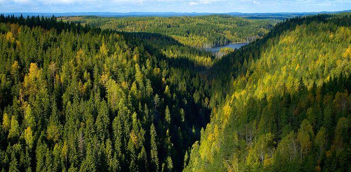 Kolvananuuron luonnonsuojelualue - Luontoon.fi