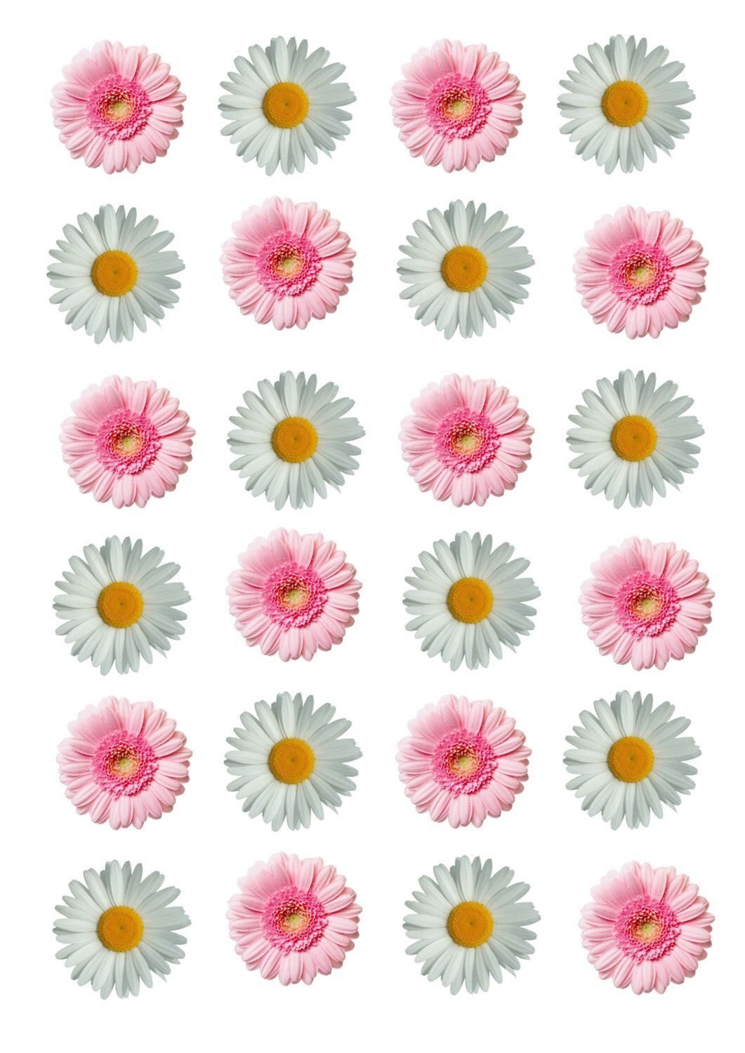 24 x precut edible pink and white daisy flowers stand up